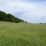 grasslands-pic